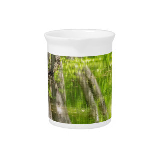 Beech tree trunks with water in spring forest beverage pitcher