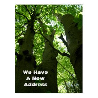 Beech Trees New Address Announcement Postcard