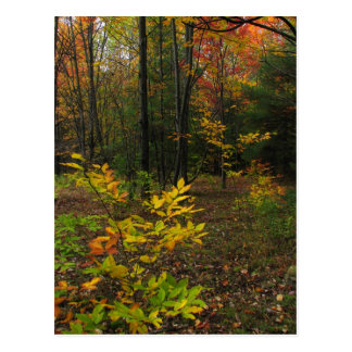 Beech Woods Postcard