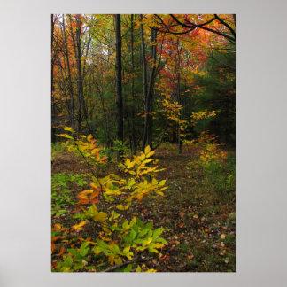 Beech Woods Posters