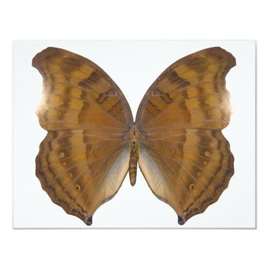 BeechWing Butterfly Card