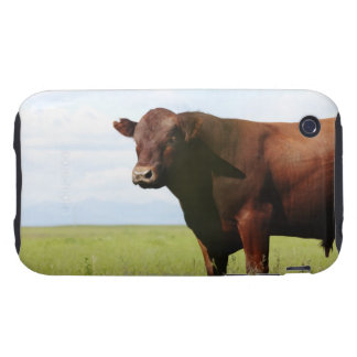 Beef cow in field iPhone 3 tough cover