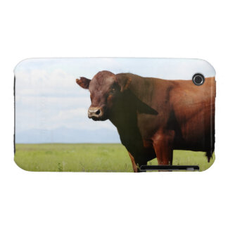 Beef cow in field Case-Mate iPhone 3 case