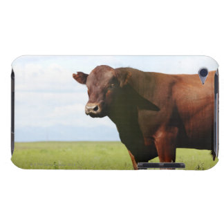 Beef cow in field iPod touch Case-Mate case