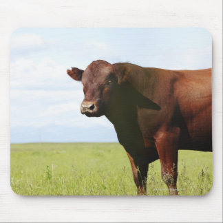 Beef cow in field mouse pad