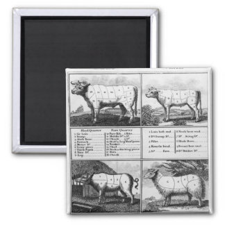 Beef Veal Pork and Mutton Cuts 1802 Fridge Magnets