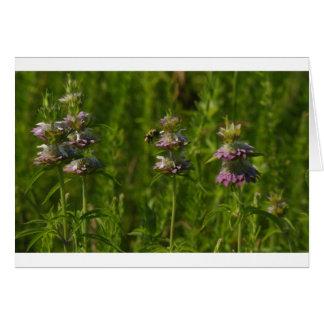 BeeFlower Card