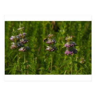 BeeFlower Postcard