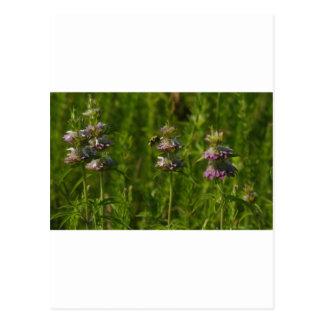 BeeFlower Tarjetas Postales