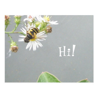 Beefly, Hi! Postcard