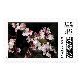 Beefsteak Begonia Blossoms Stamp