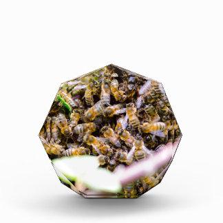 Beehive Acrylic Award
