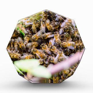 Beehive Award