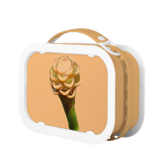 Beehive Ginger Lunchbox
