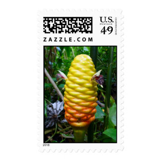 Beehive Ginger Postage