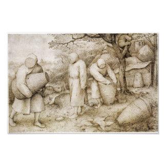 Beekeepers by Pieter Bruegel the Elder Photo