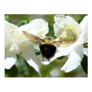 Bee'n ocupado tarjetas postales