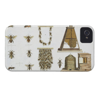 Bees and bee-keeping, from 'The Young Landsman', p iPhone 4 Cover