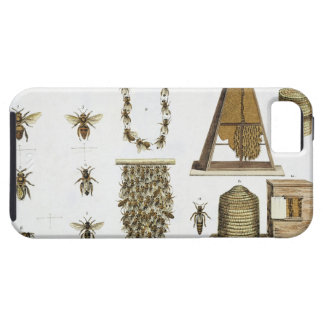 Bees and bee-keeping, from 'The Young Landsman', p iPhone SE/5/5s Case