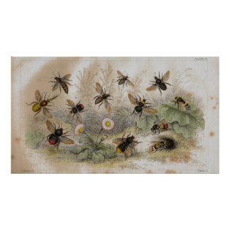 Bees Antique Lithograph print