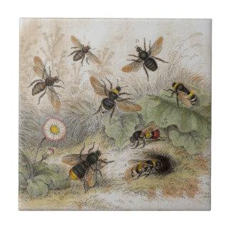Bees Antique Lithograph print tile