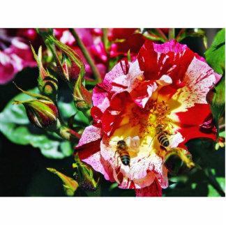 Bees At The Rose Photo Cutouts