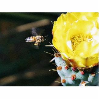 Bees Cactus Flowers Photo Sculpture