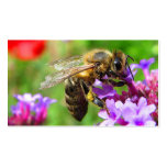 Bees for Sale Business Card