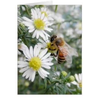 Bees Honey Bee Wildflowers Flowers Daisies Photo Card