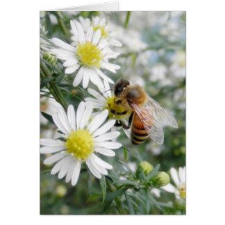 Bees Honey Bee Wildflowers Flowers Daisies Photo Card