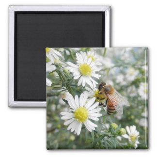 Bees Honey Bee Wildflowers Flowers Daisies Photo Fridge Magnet