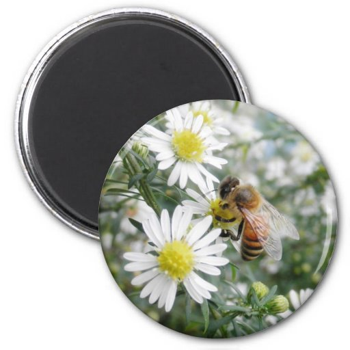 Bees Honey Bee Wildflowers Flowers Daisies Photo Magnets