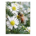 Bees Honey Bee Wildflowers Flowers Daisies Photo Postcard