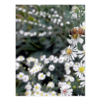 Bees Honey Bee Wildflowers Flowers Daisies Photo Postcard