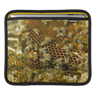 Bees In Hive, Western Cape, South Africa iPad Sleeve