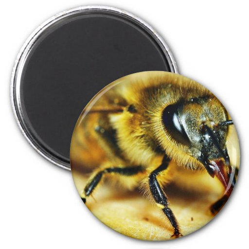 Bees Insects 2 Inch Round Magnet