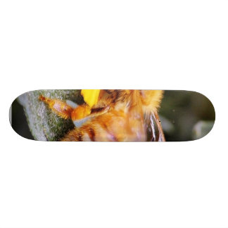 Bees Insects 3 Custom Skateboard