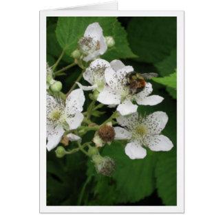 Bees love Blackberry Flowers Card