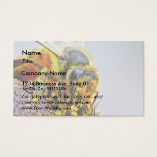 Bees Macro Pollen Insects Business Card