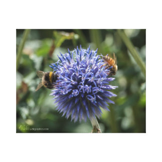 Bees on Globe Thistle Canvas Print