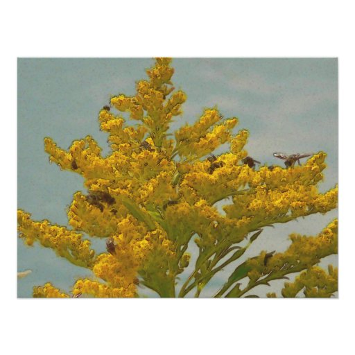 Bees on Goldenrod I Posters