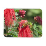 Bees on Pink Flower Magnet