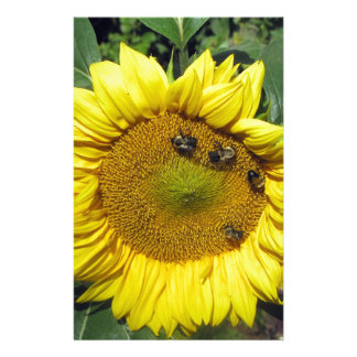 Bees on Sunflower Stationery