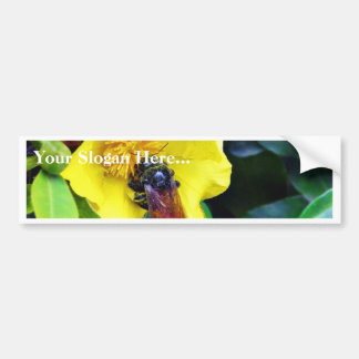 Bees On Yellow Flowers Pollen Car Bumper Sticker