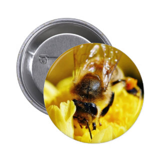 Bees Pollen Insects Wings Macro Bugs Pins