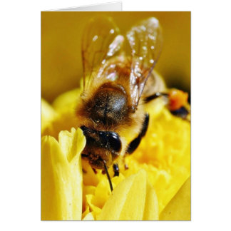 Bees Pollen Insects Wings Macro Bugs Card