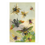 Bees Post Cards