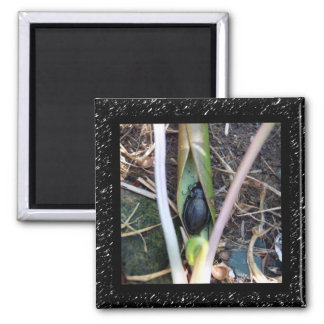 Beetle Blanket Magnet