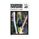 Beetle Blanket Stamp