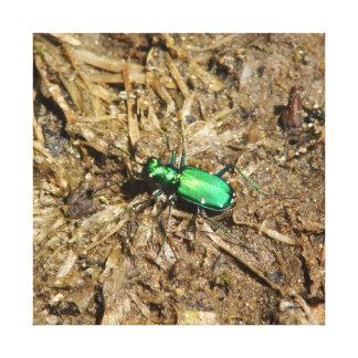 Beetle, Canvas Print.